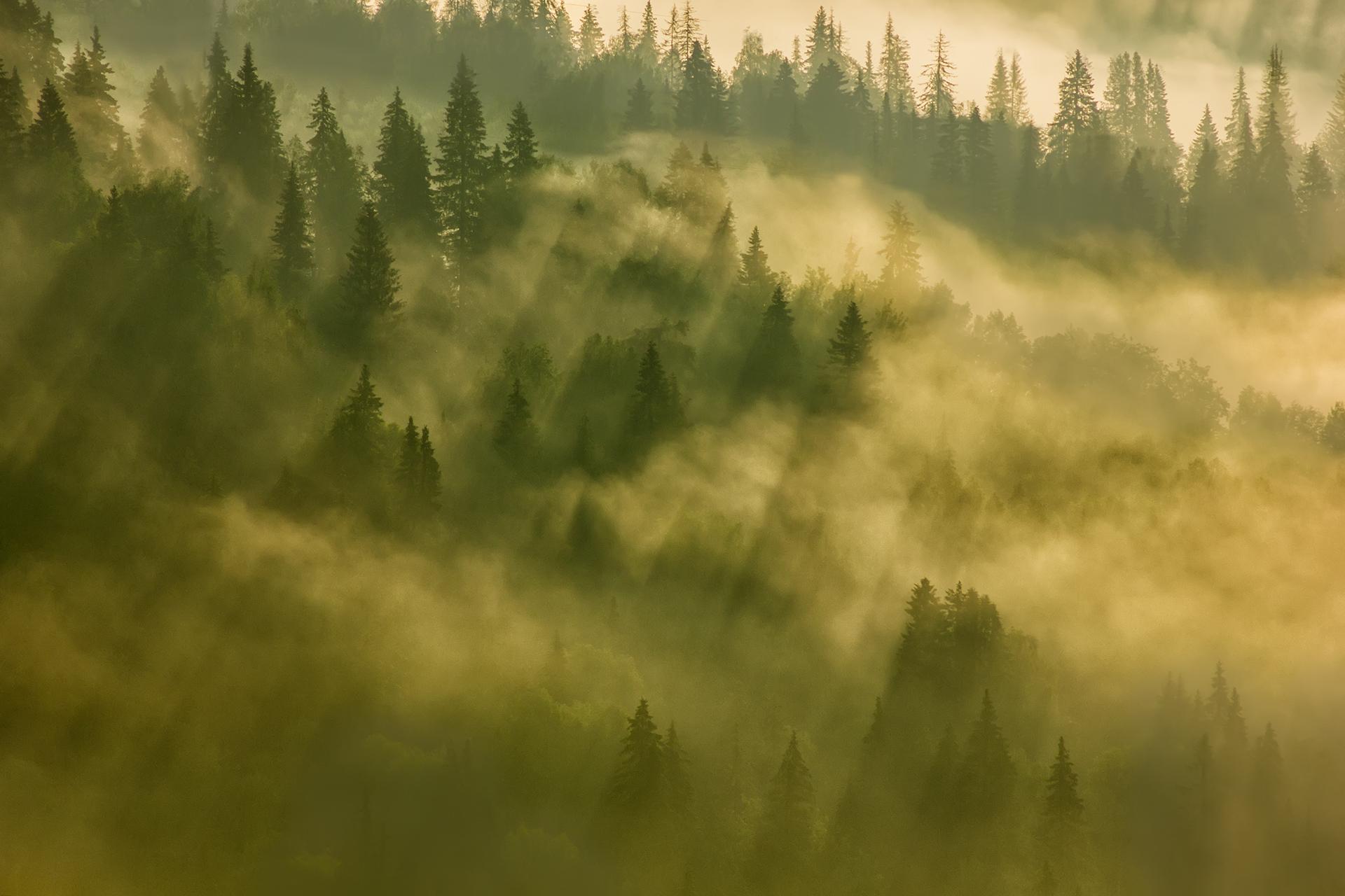 Пейзаж_Волшебное утро