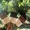 Thumbnail: Beeswrap - Sandwich Wraps