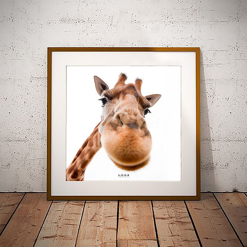 Giraf-plakat