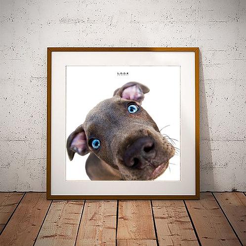 Hund-plakat