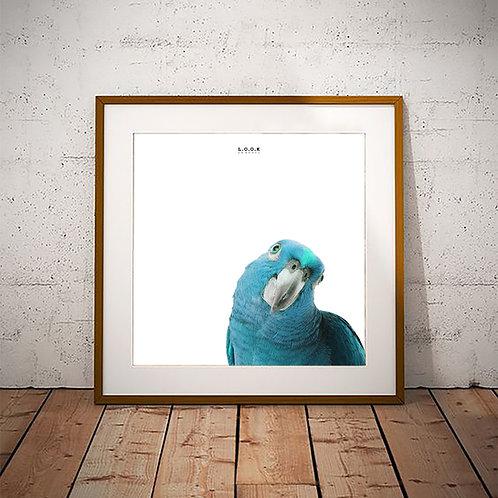 Papegøje-plakat