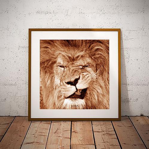 Løve-plakat