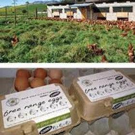 Solitaire Jumbo free range eggs 12's