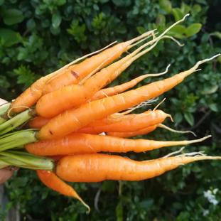 Baby Carrots 300g.