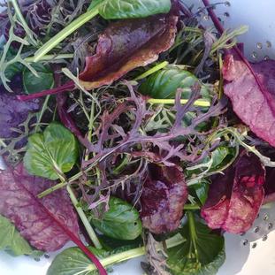 Asian Salad Mix 120g.