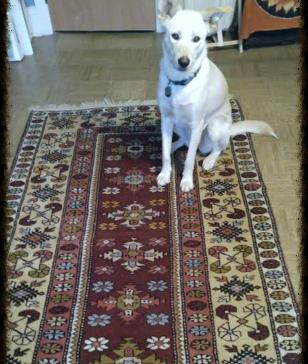 The Story of the Rug