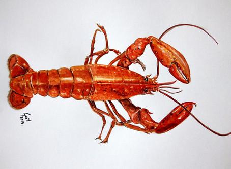 Dessin du jour...un homard!