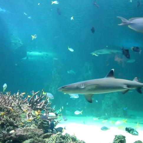 Under The Sun Fish Aquarium