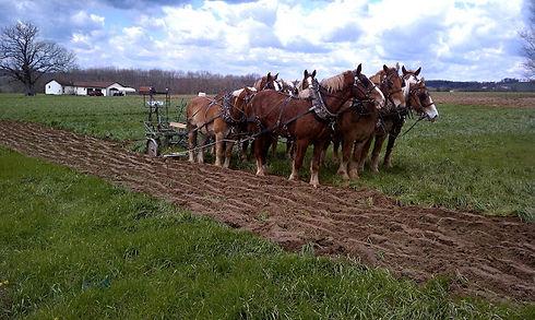 Team of horses (1).jpg