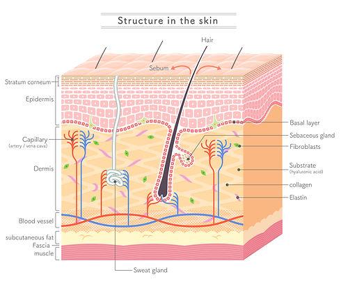 tratamento-mesoterapia-estetica-lisboa-m