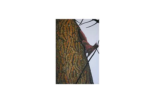 Original - Acrylbild 60x40 cm - Eichhörnchen am Selenter See