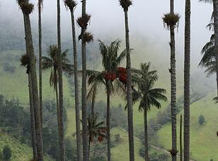 Salento et sa vallée Cocora
