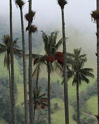 Salento et la Vallée Cocora