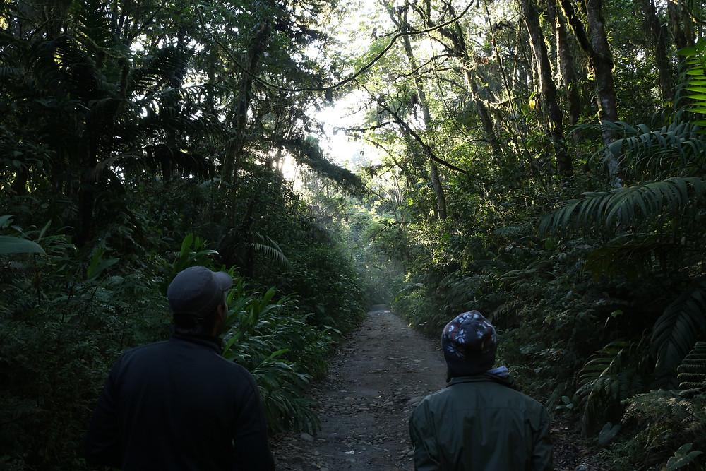 Randonnée Sanctuaire Otun Quimbaya Colombie