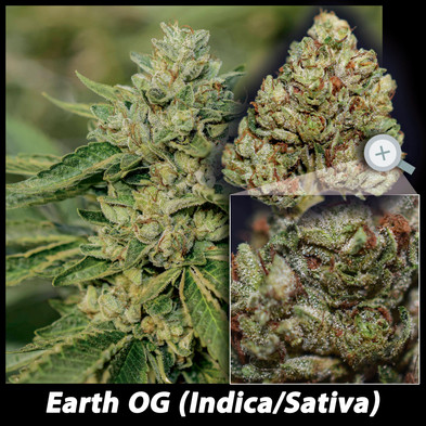 EARTH OG details email.jpg