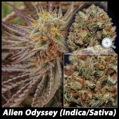 Alien Odyssey details email.jpg