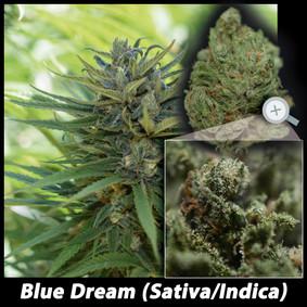 Blue Dream ML Details email.jpg
