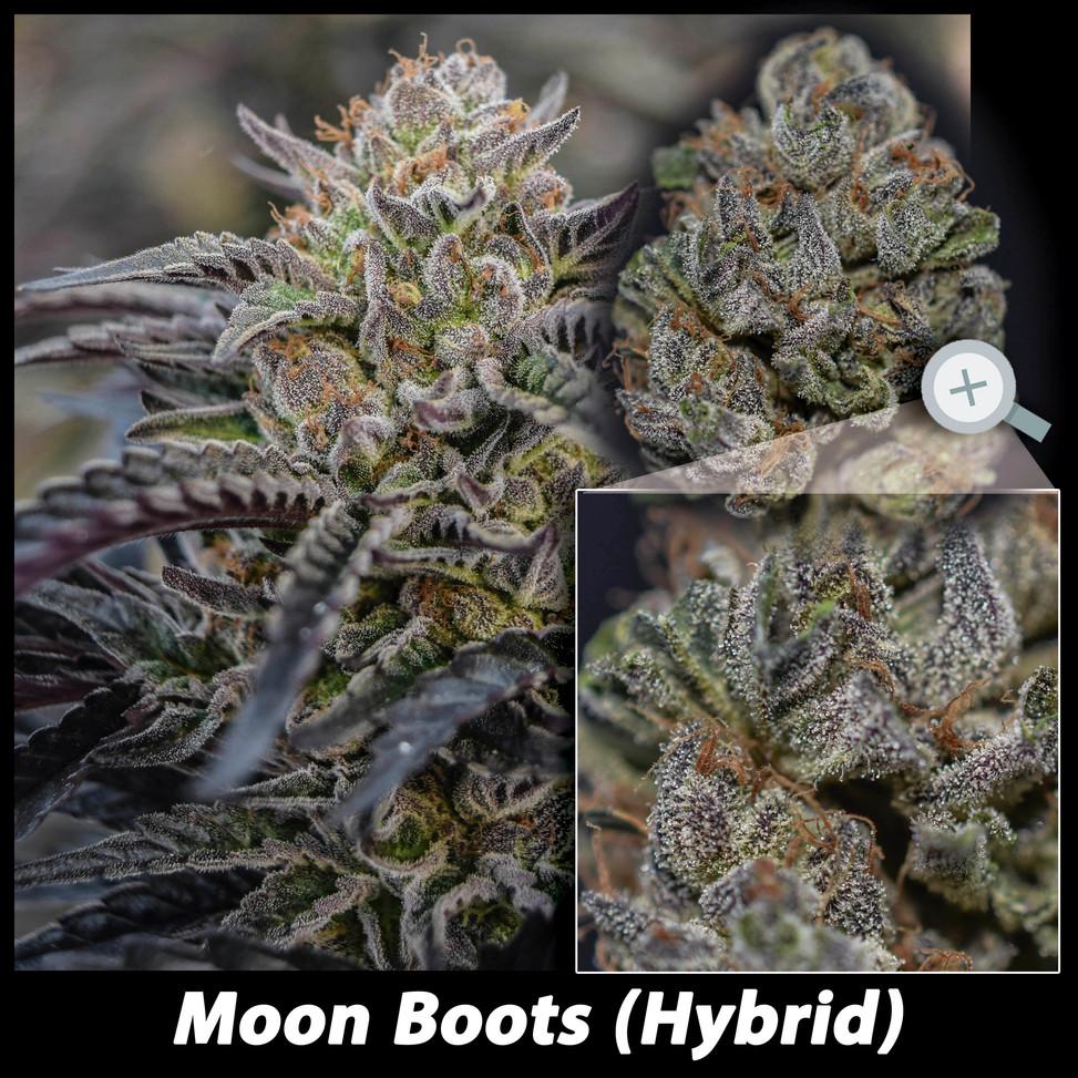 Moonboots details email.jpg