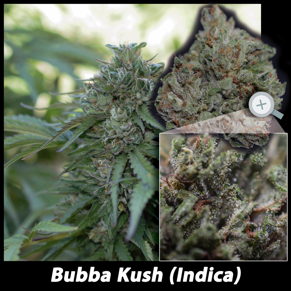 Bubba ML Details email.jpg