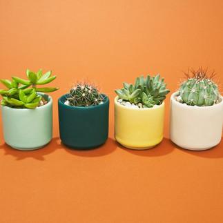 Plant Gram