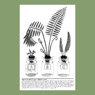 Street Botany Print