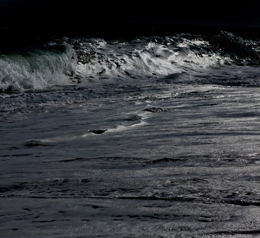 0016_Moonlight Palm Beach.small.jpg