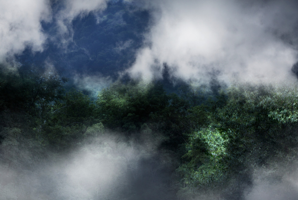 0004_fog_in_onteora1_o.jpg