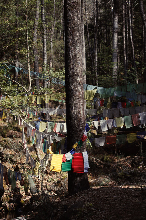 0022_tree_with_prayer_flags3_tigers_nest