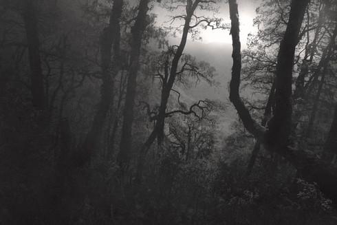 0032_Trees tiger's Nest1medium.jpg