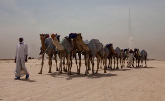 0041_dubai_caravan_of_camels_o.jpg