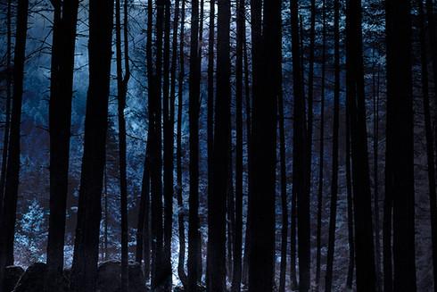0056_Moonlight through the trees. Mounta