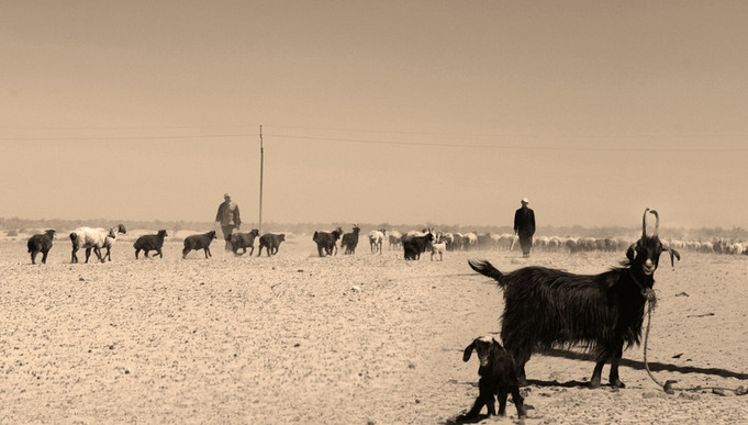 0010_Goats on the Stepps Sepia.jpg