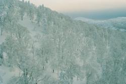 Aomori Forest