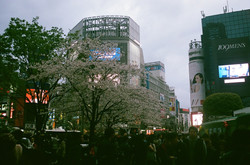 Spring in Shibuya