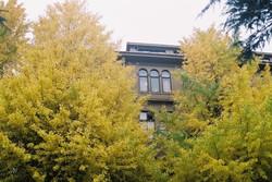 Academic yellow