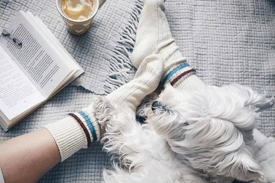 Sammy Icon Wool Socks