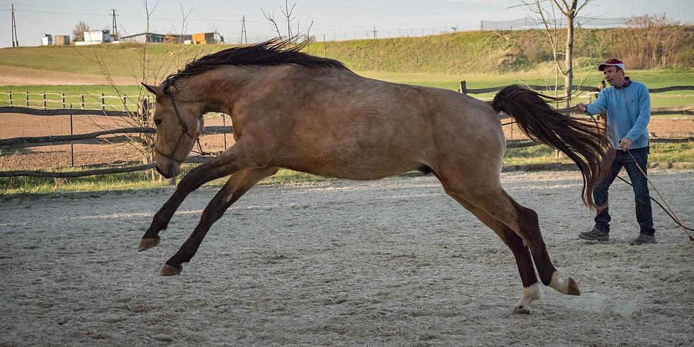 """MASTERVORLAGE """"Transformiere das schreckhafte Pferd"""""""