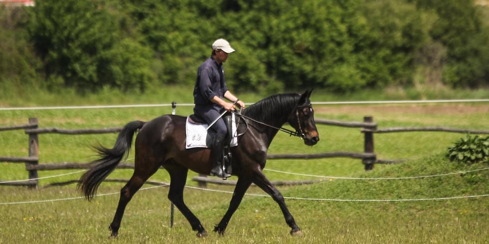 """""""Präzises, feines Reiten - werde körperlich fit und entwickle ein rittiges Pferd"""" / 3 Module zu je 2 Tagen"""
