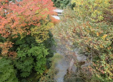 氷川渓谷遊歩道の紅葉