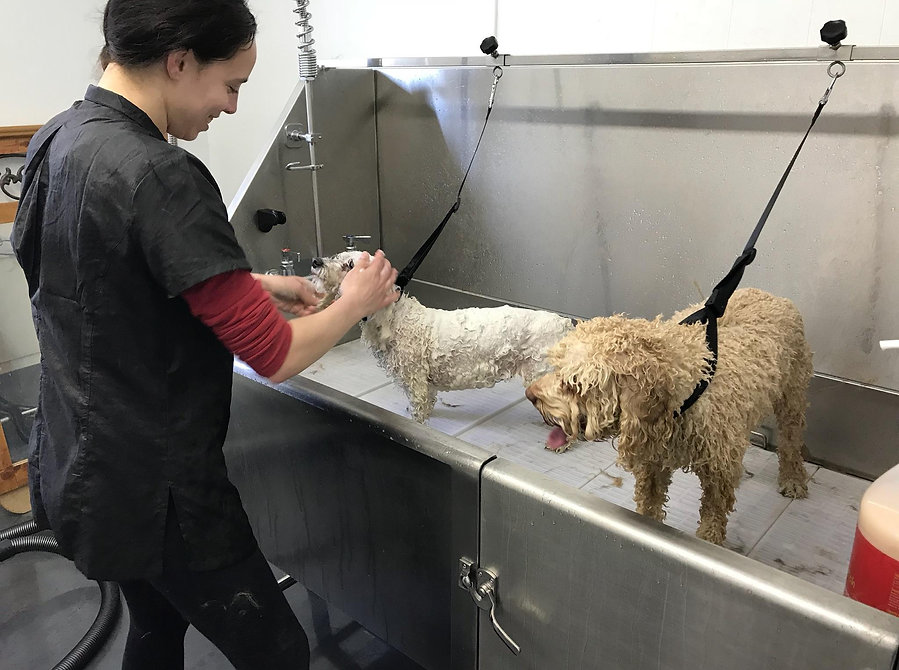 Lauren bathing dogs at Pawsitively Pampered Pet Salon