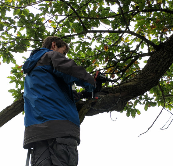 endoscope training