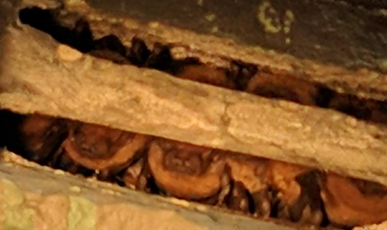 noctules in bat box
