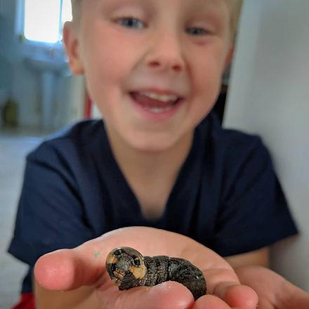 boy with elephant hawkmoth caterpillar
