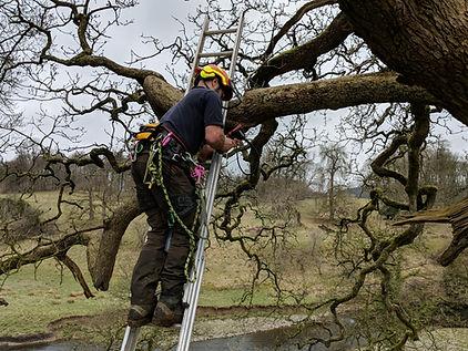 Endoscoping for arborists
