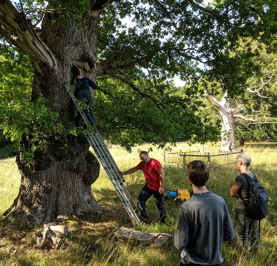 bat tree survey