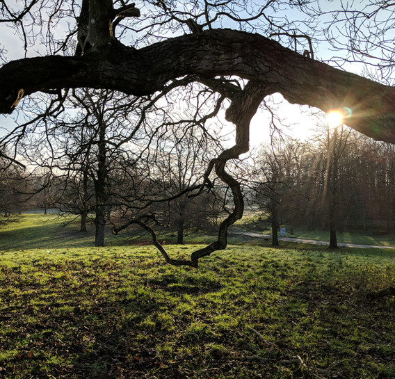 sun through the trees