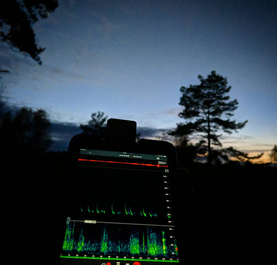 bat surveying