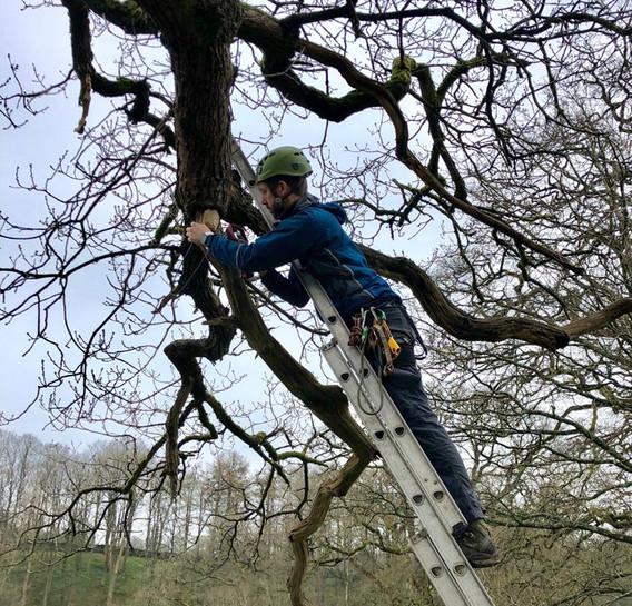 bat survey of trees