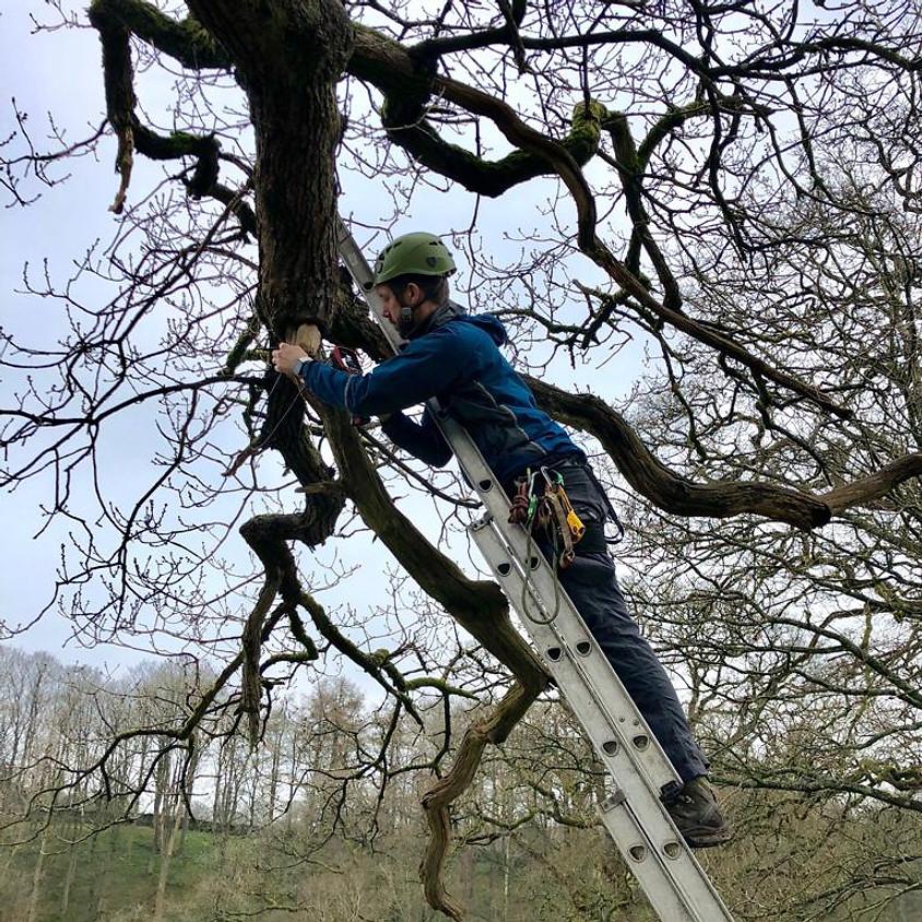 Endoscope Use for Arborists