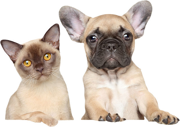Dog & Cat Cropped 1sm_edited.jpg